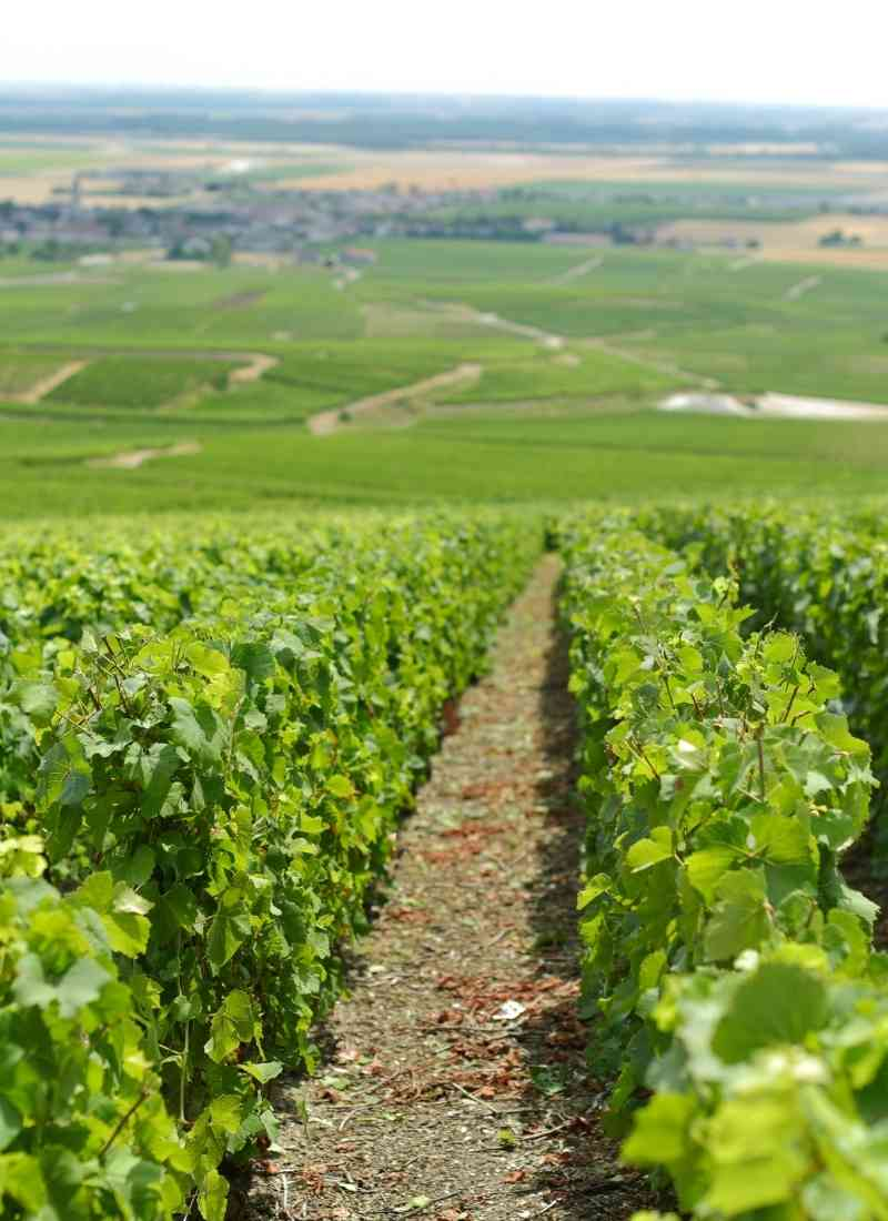 appellation-champagne-achat-vin-circuit-court-datawine