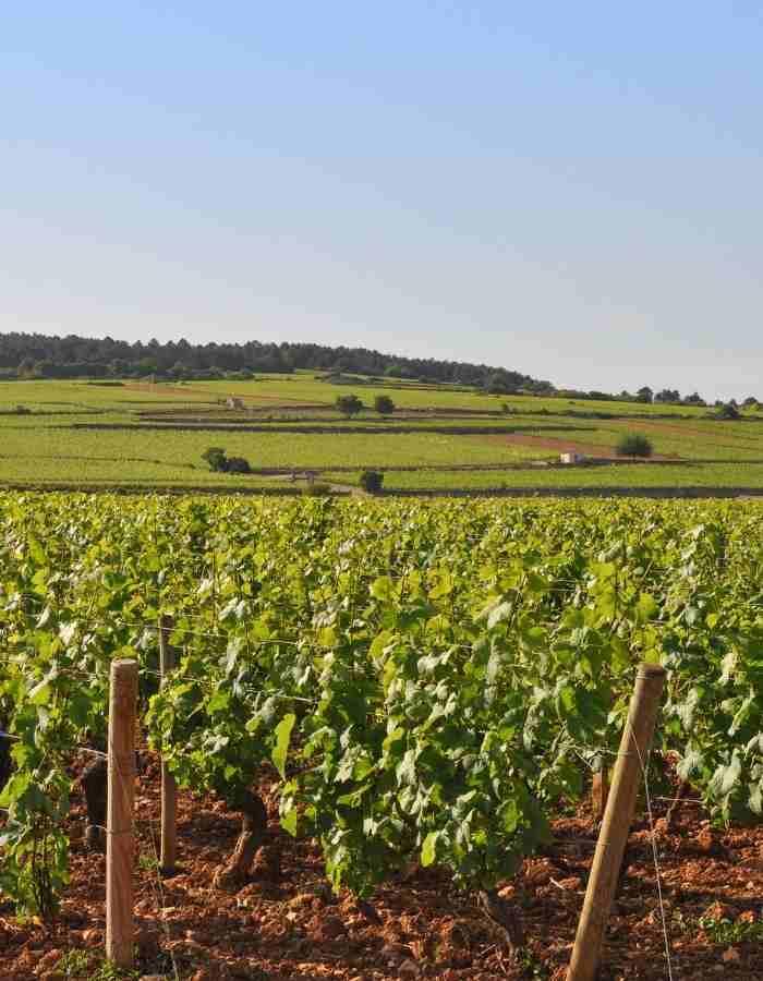 appellation-vins-de-bourgogne-achat-vin-circuit-court-datawine