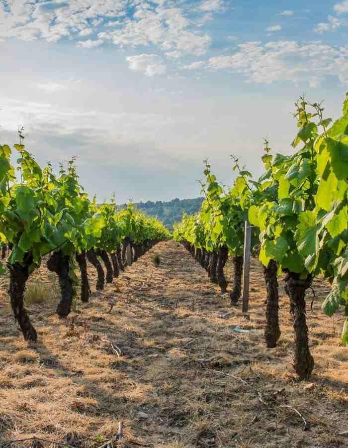 appellation-vins-du-beaujolais-achat-vin-circuit-court-datawine