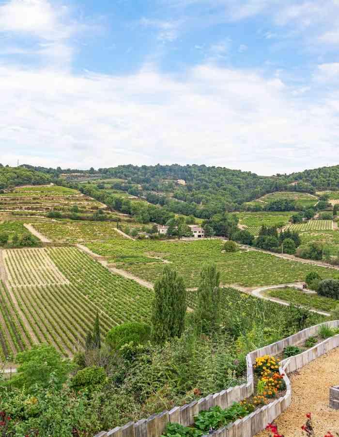 appellation-vins-vallee-du-rhone-achat-vin-circuit-court-datawine