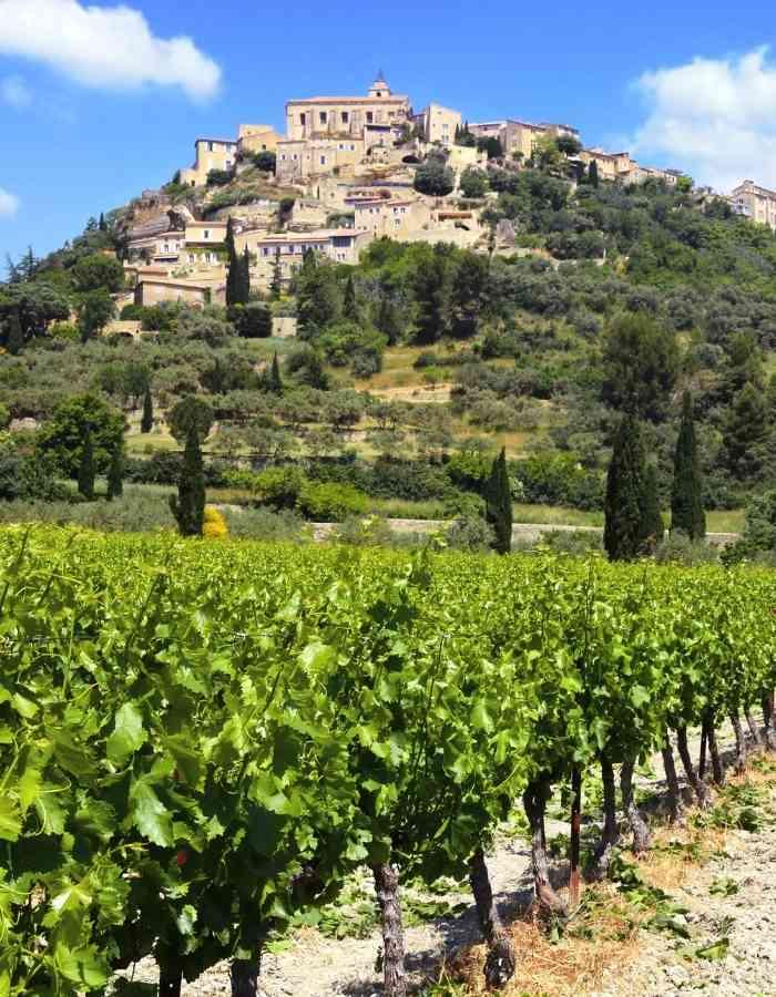 vignes-de-provence-achat-vin-circuit-court